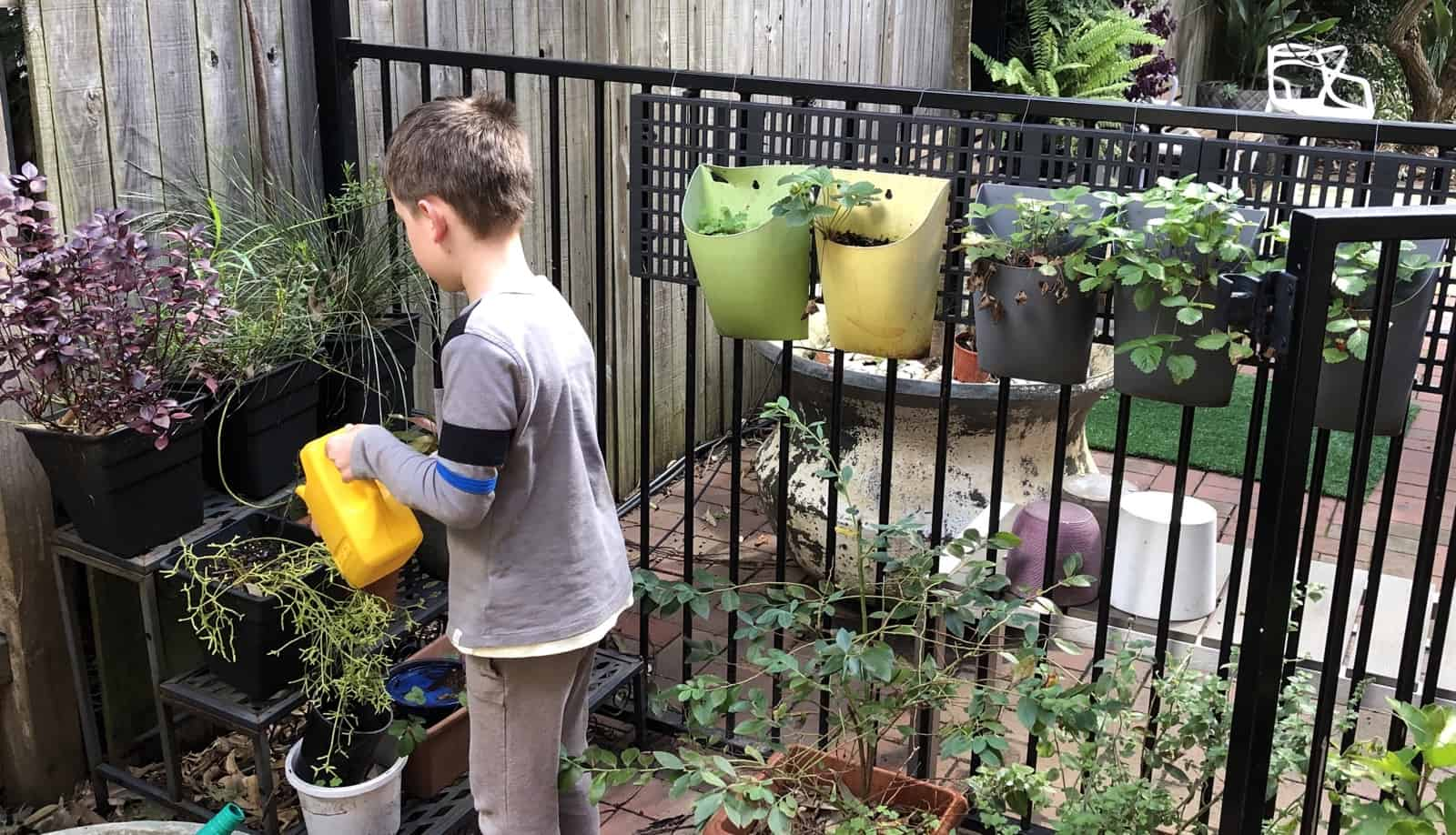 Watering the plants at the end of the day is a part of Montessori chores.