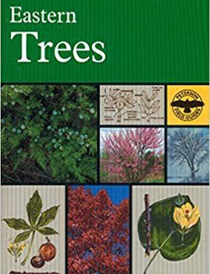 Eastern Trees_book