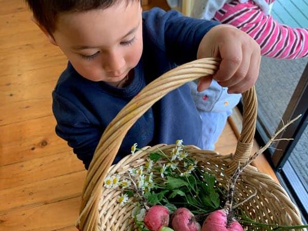 Toddler - Picking fresh produce